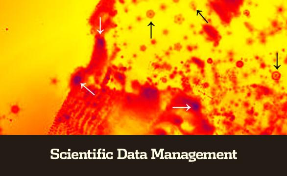 managed_scientific_roundabouts_ScientificDataManagement